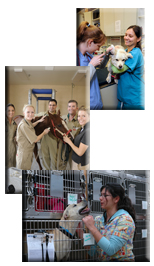 picture college of veterinary students working in various clinical settings