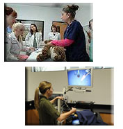picture collage of veterinary professionals treating patients in various settings