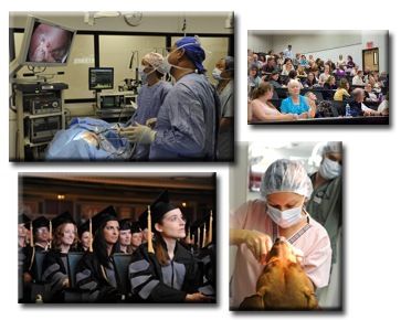 Picture collage showing veterinary students in education and practice settings